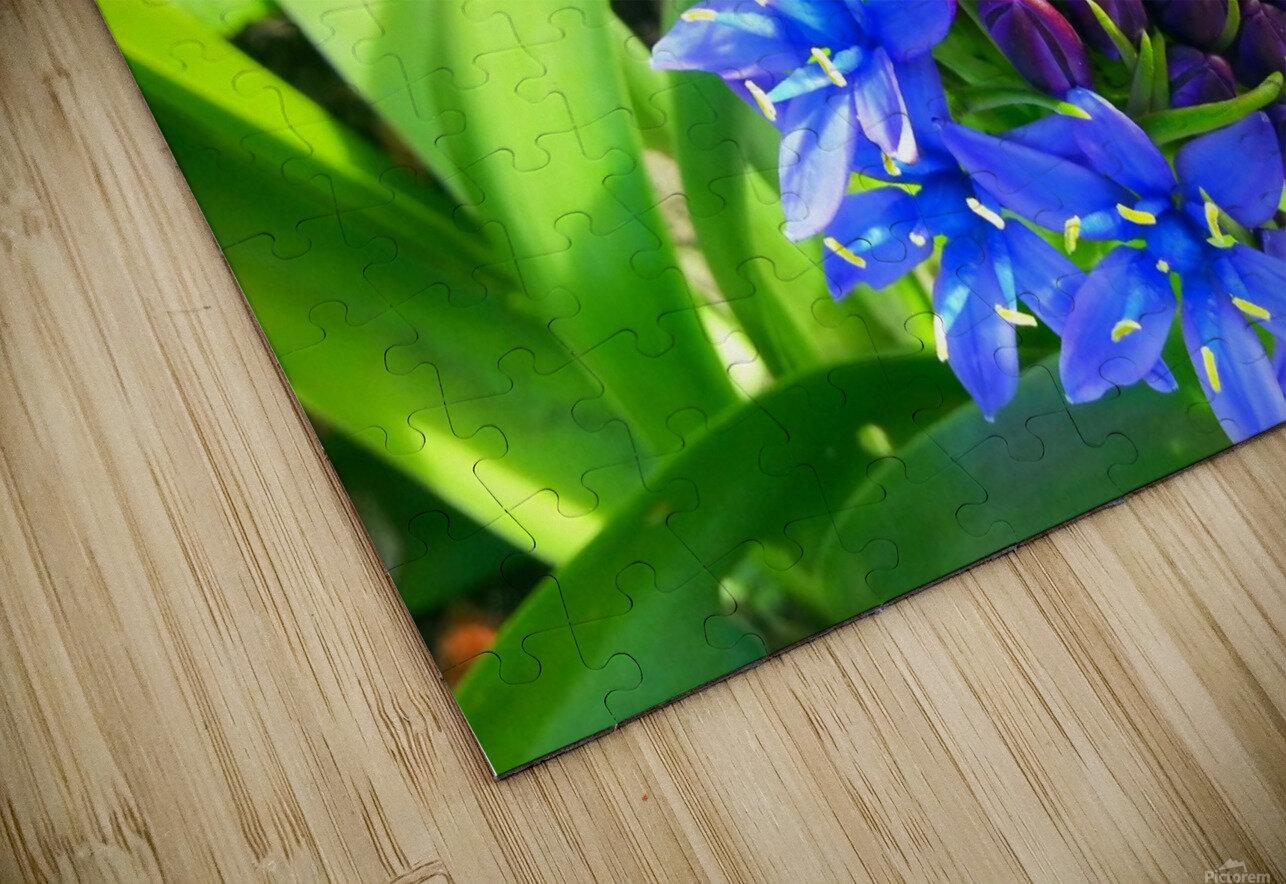 Blue Flower HD Sublimation Metal print