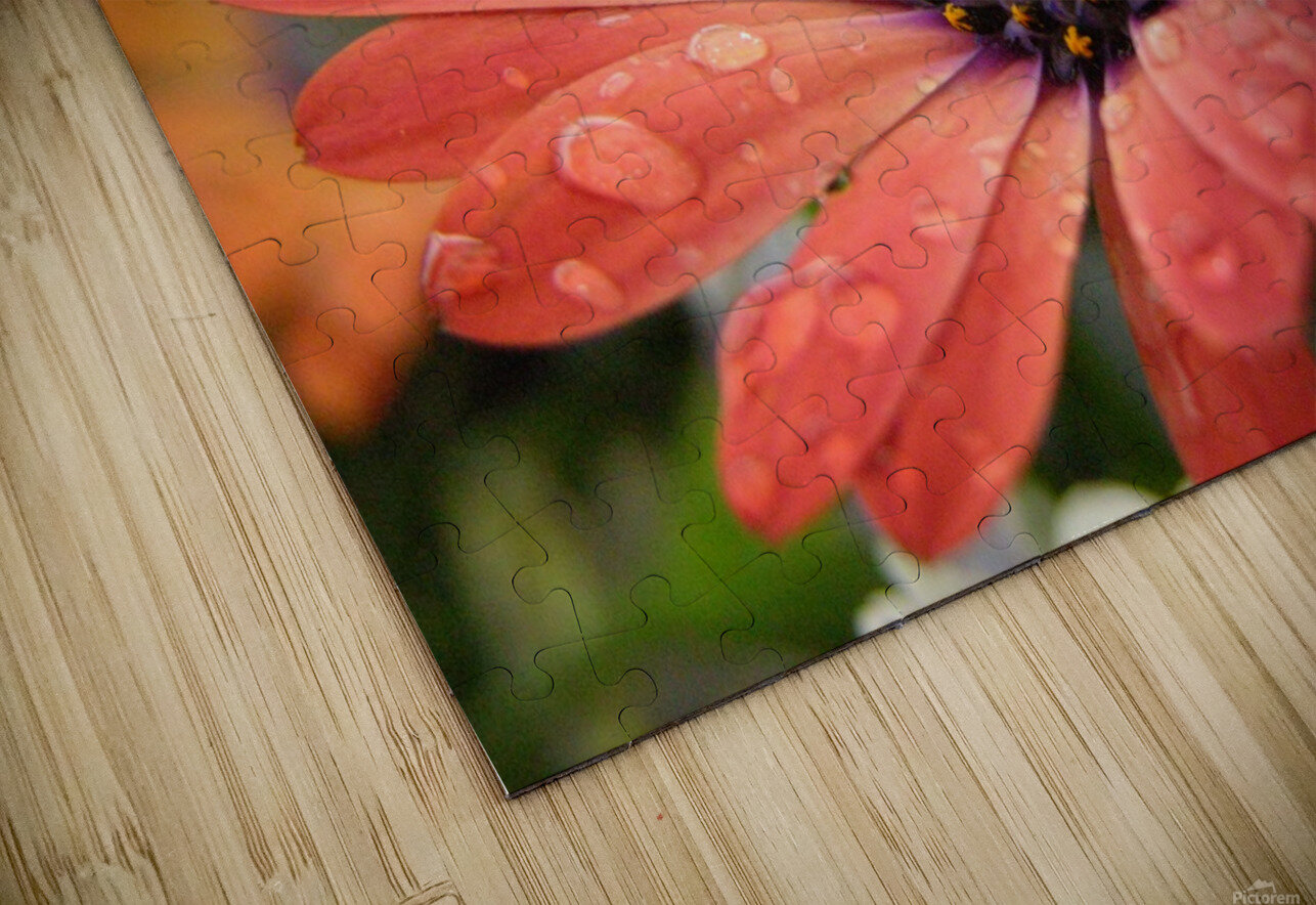 Orange Flower Covered In Rain Drops Photograph HD Sublimation Metal print