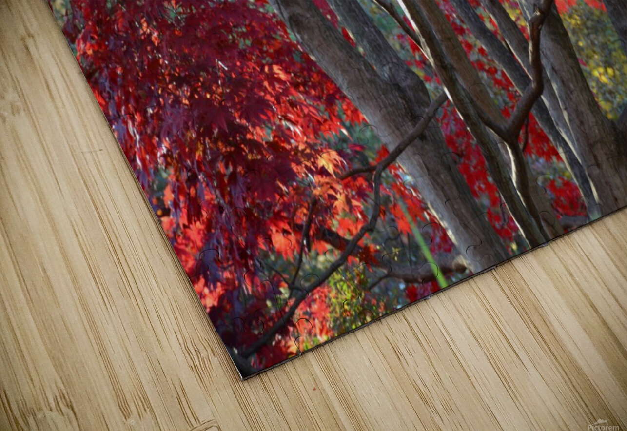 Beautiful Red Fall Foliage HD Sublimation Metal print