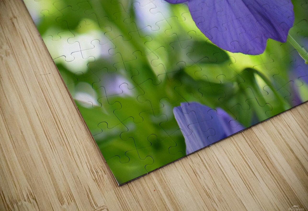 Blue Pansy Photograph Impression de sublimation métal HD