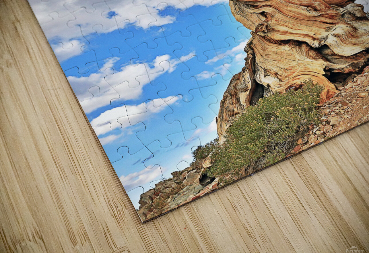 Ageless HD Sublimation Metal print