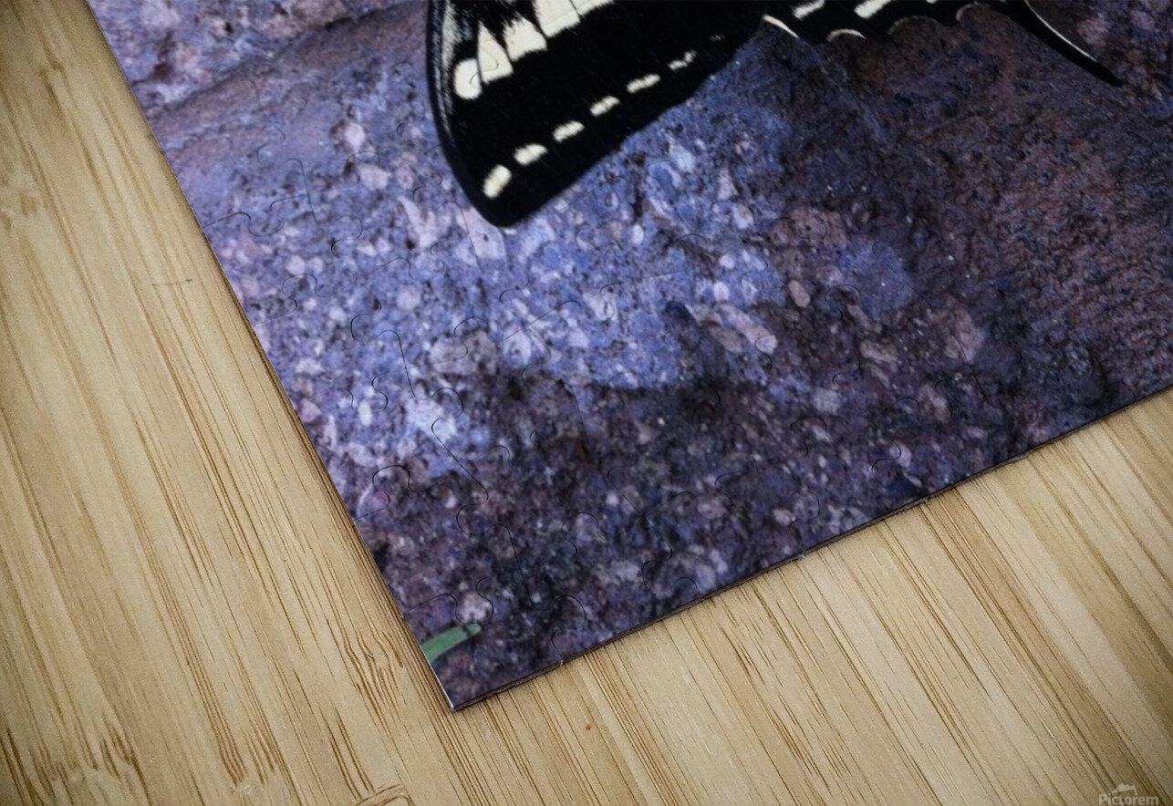 Swallowtail on Stone Wall HD Sublimation Metal print