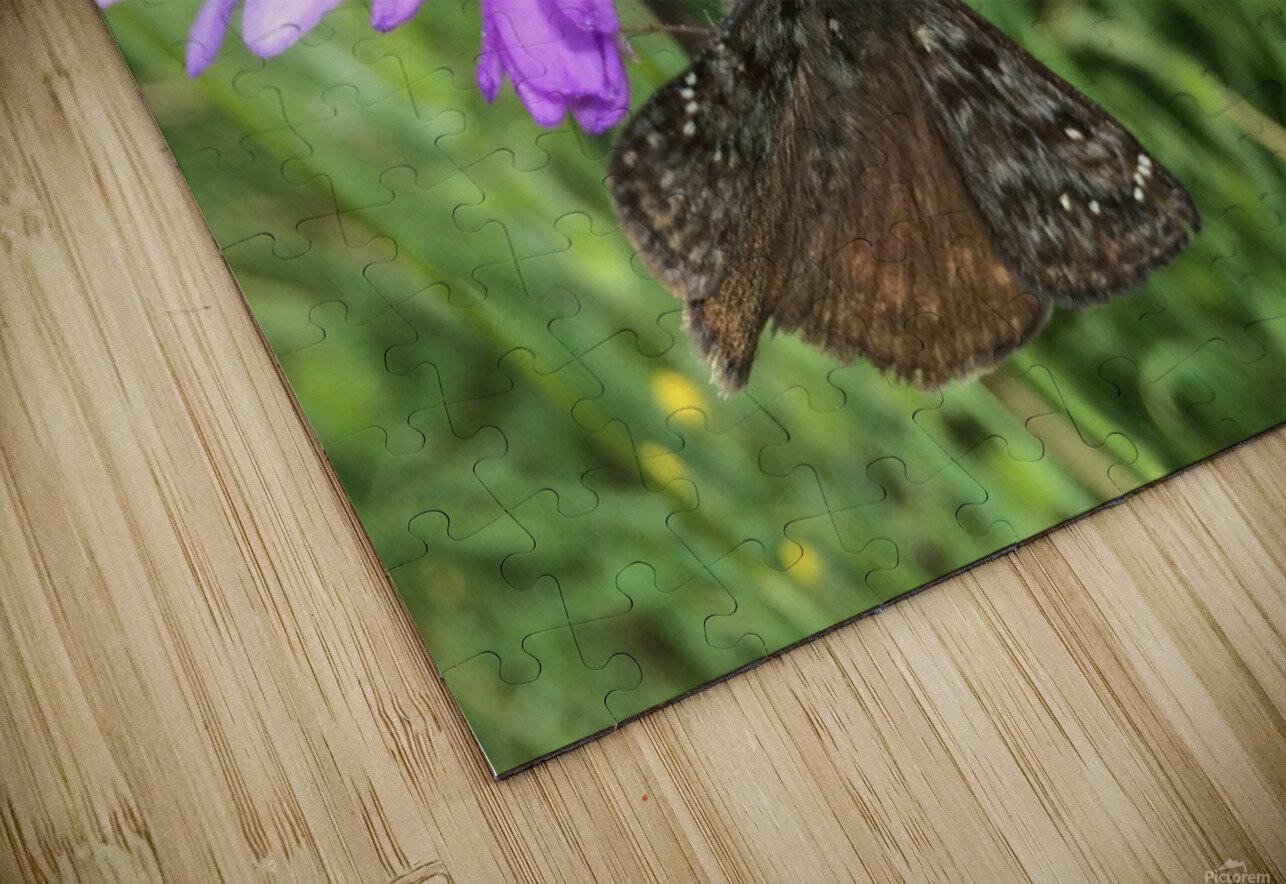 Butterfly on Wildflower HD Sublimation Metal print