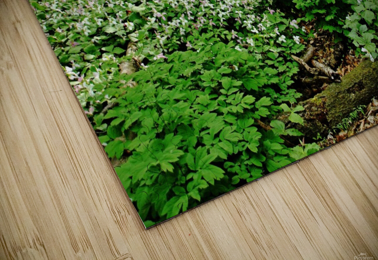 Trillium Woods VI HD Sublimation Metal print