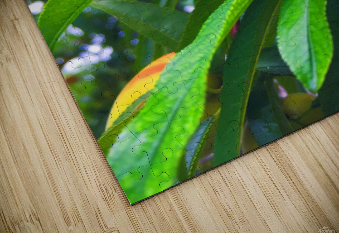 Peach  HD Sublimation Metal print