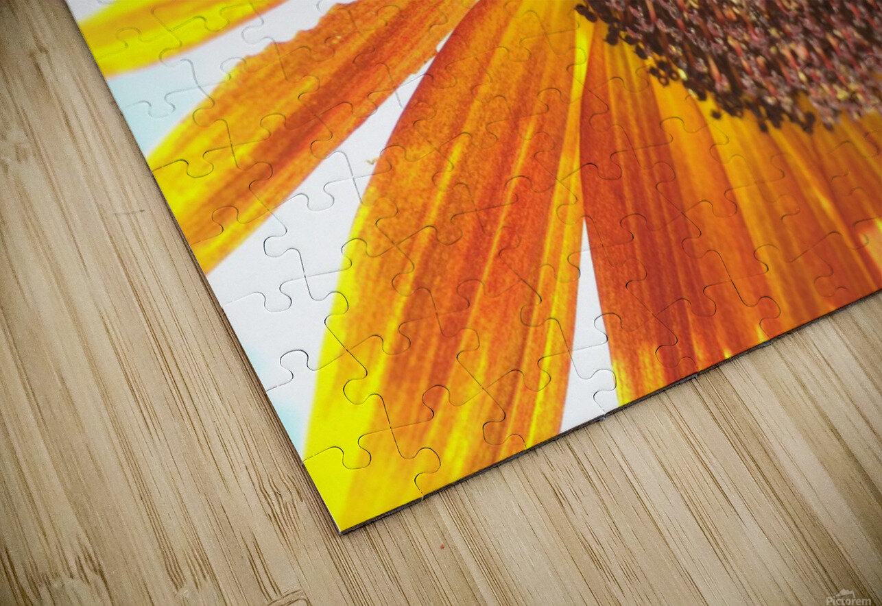 Bumblebee on Sunflower HD Sublimation Metal print