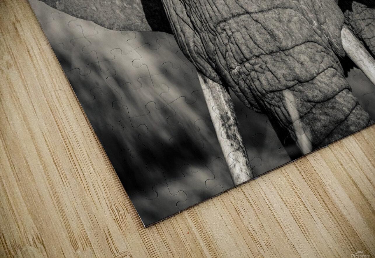 Elephant Portrait HD Sublimation Metal print