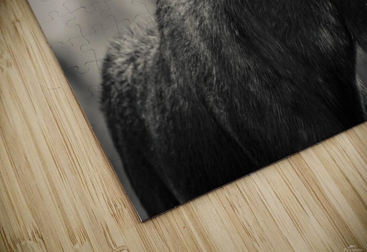 Moose Portrait - 2 HD Sublimation Metal print