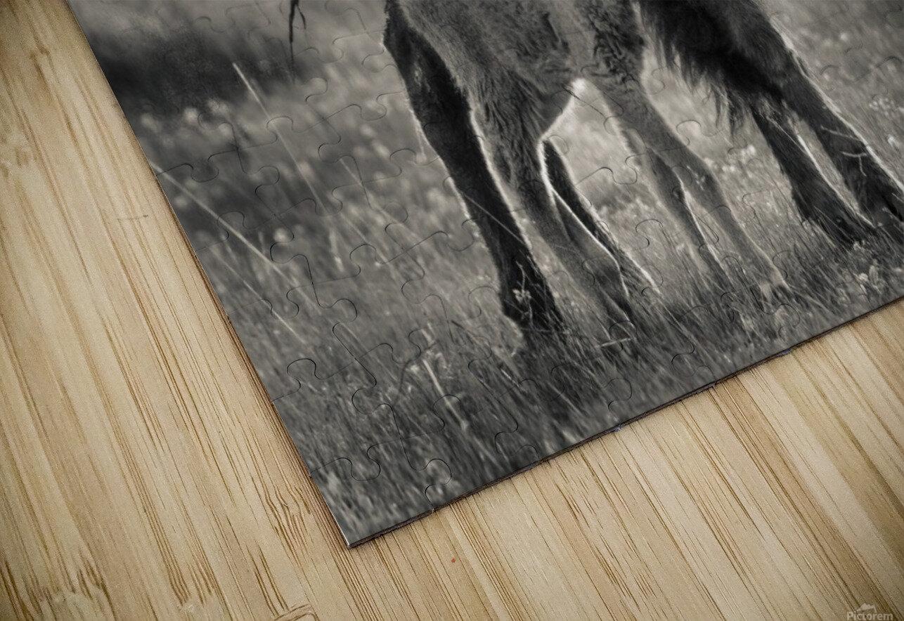Bison love HD Sublimation Metal print