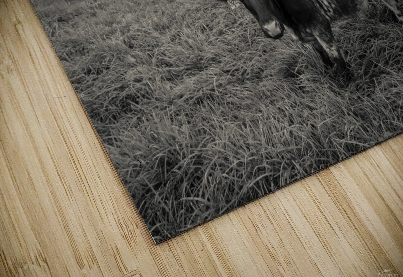 Cowscape HD Sublimation Metal print