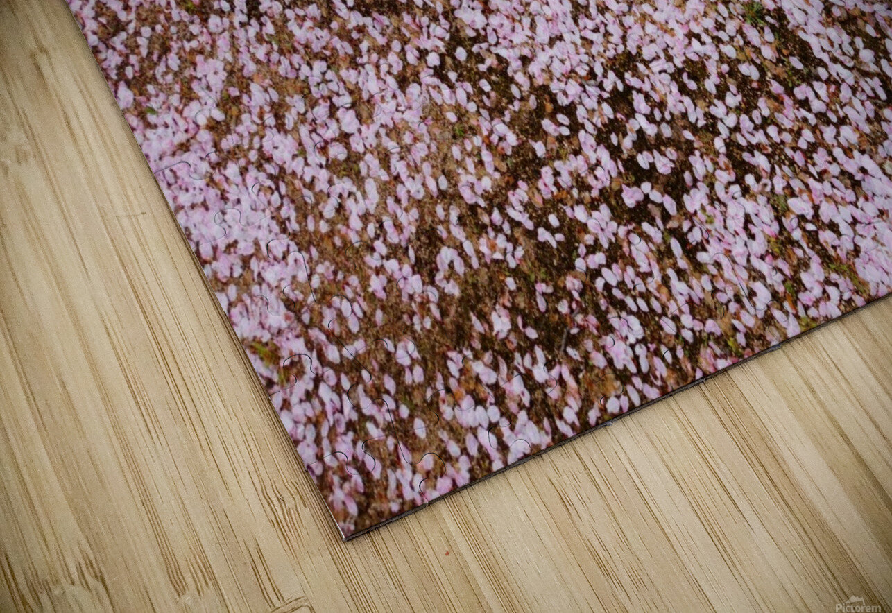 Sakura Petals HD Sublimation Metal print