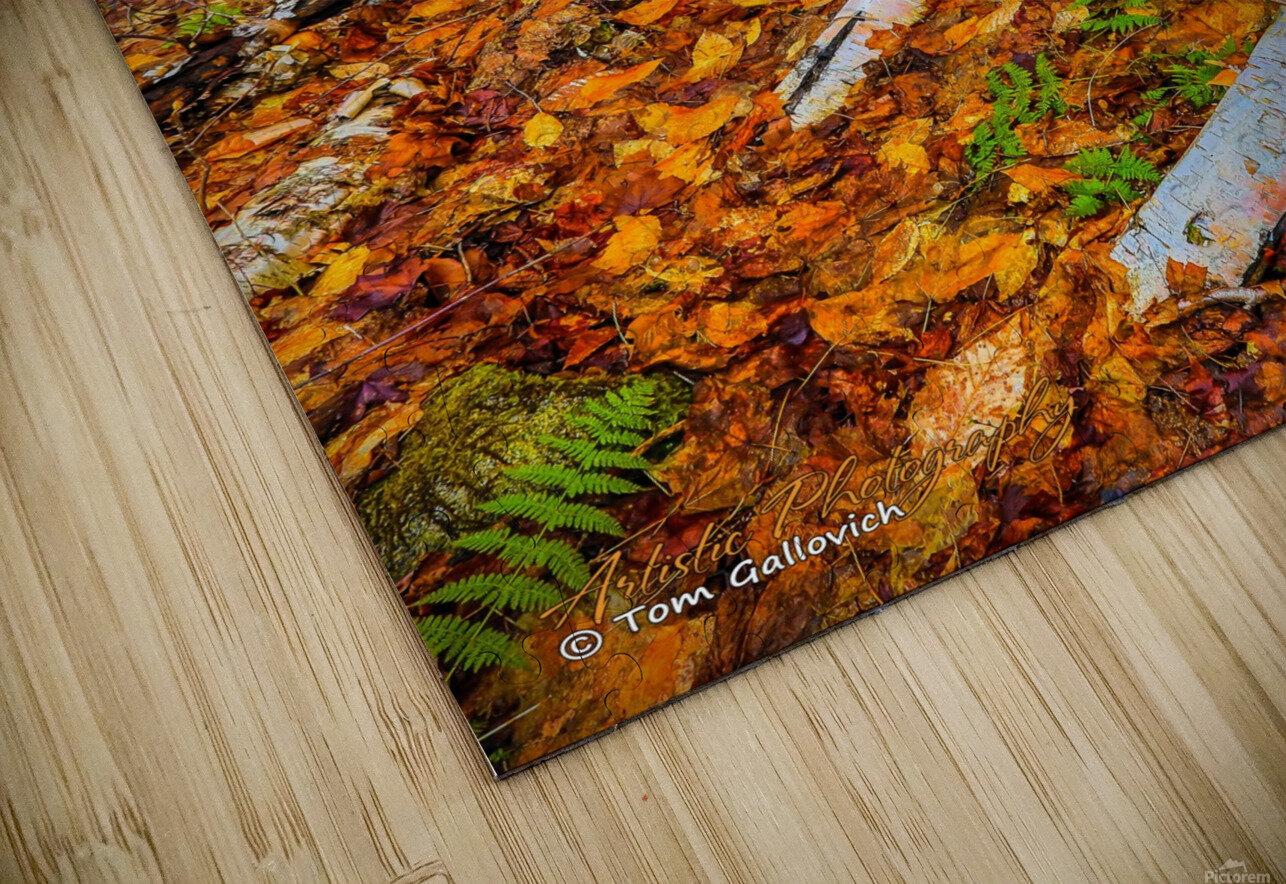 White Birch - APC-261 HD Sublimation Metal print