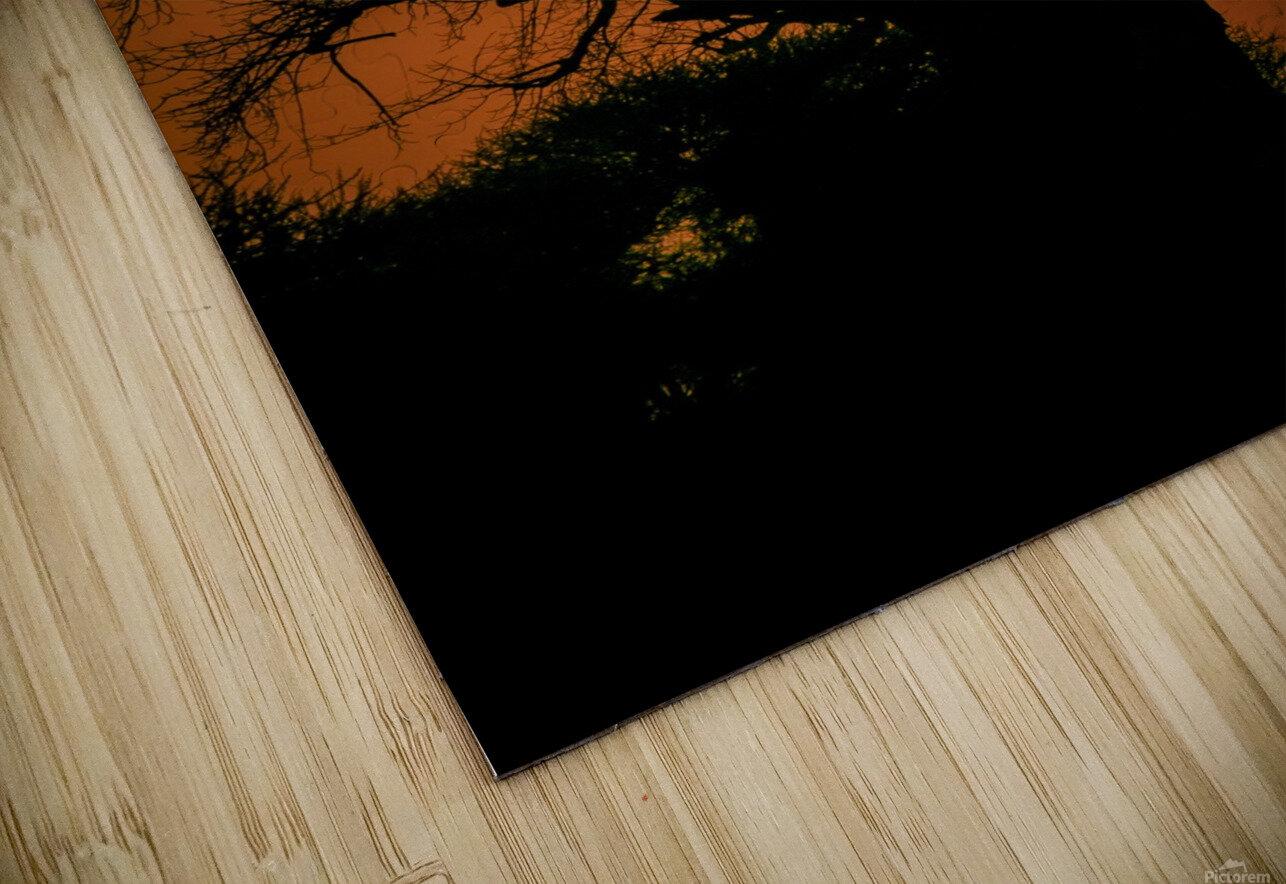 Baobab Sunset HD Sublimation Metal print