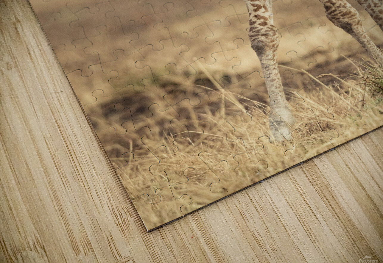 Little Girafe HD Sublimation Metal print