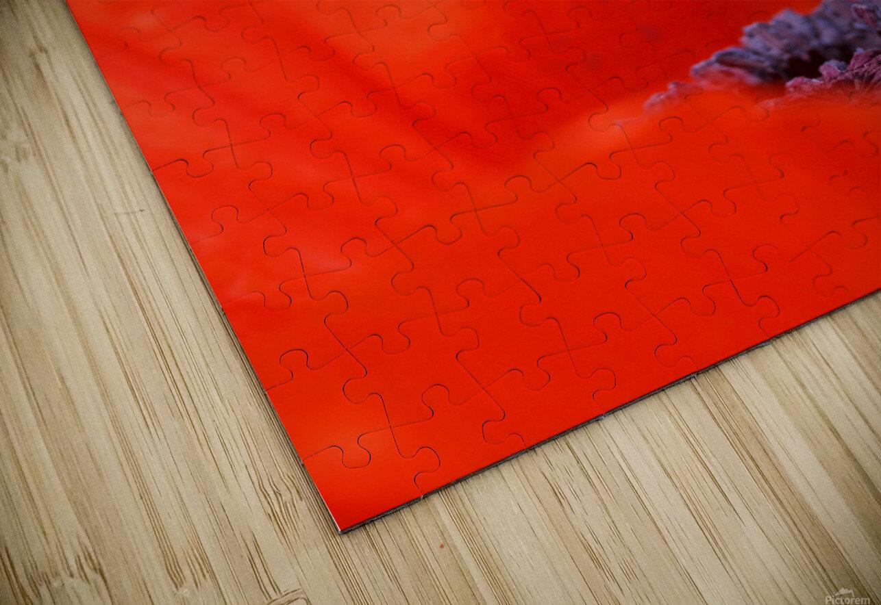 Poppy Heart I HD Sublimation Metal print