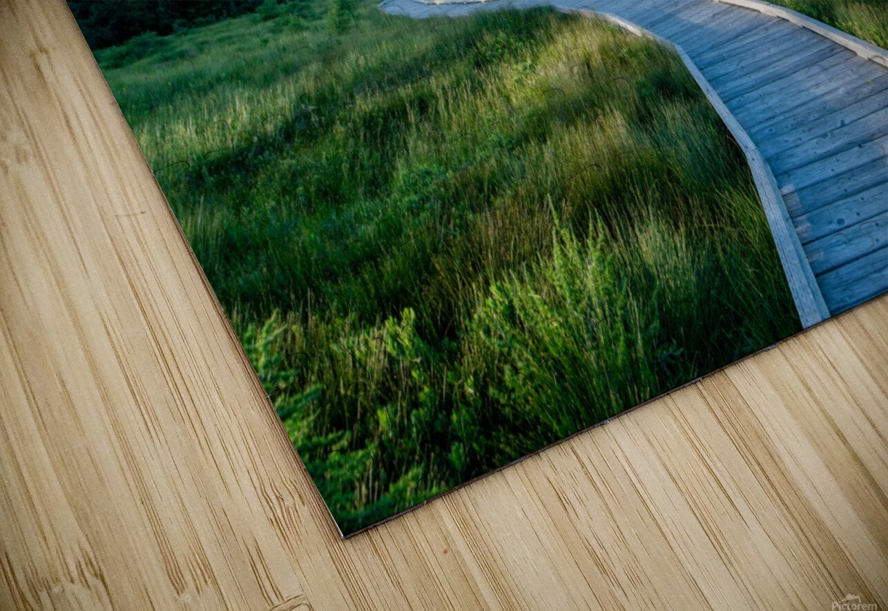 A walk at the Bog HD Sublimation Metal print