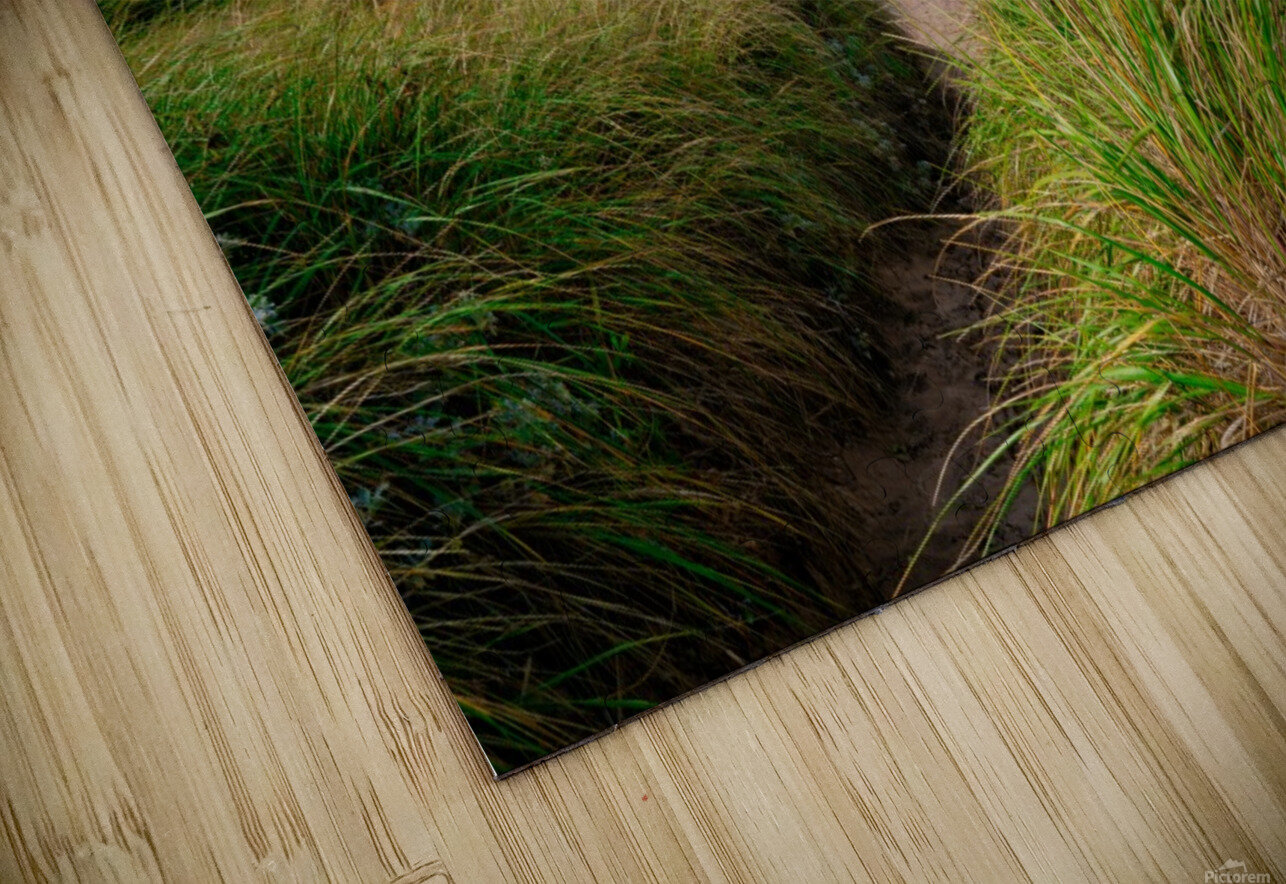 Sand and Grass HD Sublimation Metal print