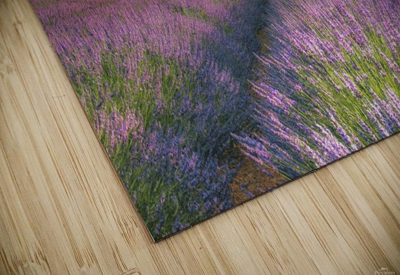 Velours de Lavender HD Sublimation Metal print