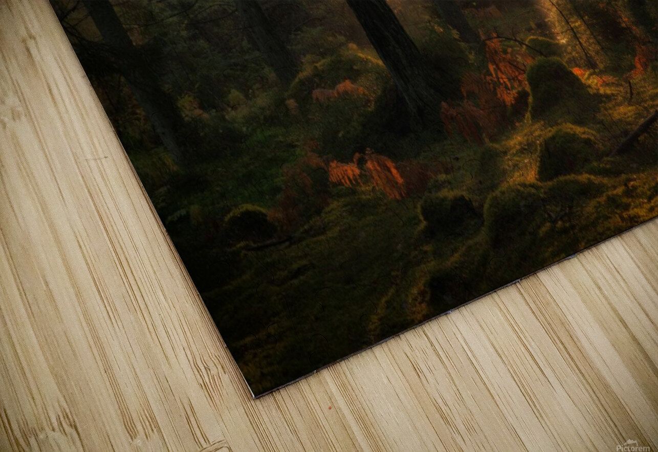 The light in the forest HD Sublimation Metal print