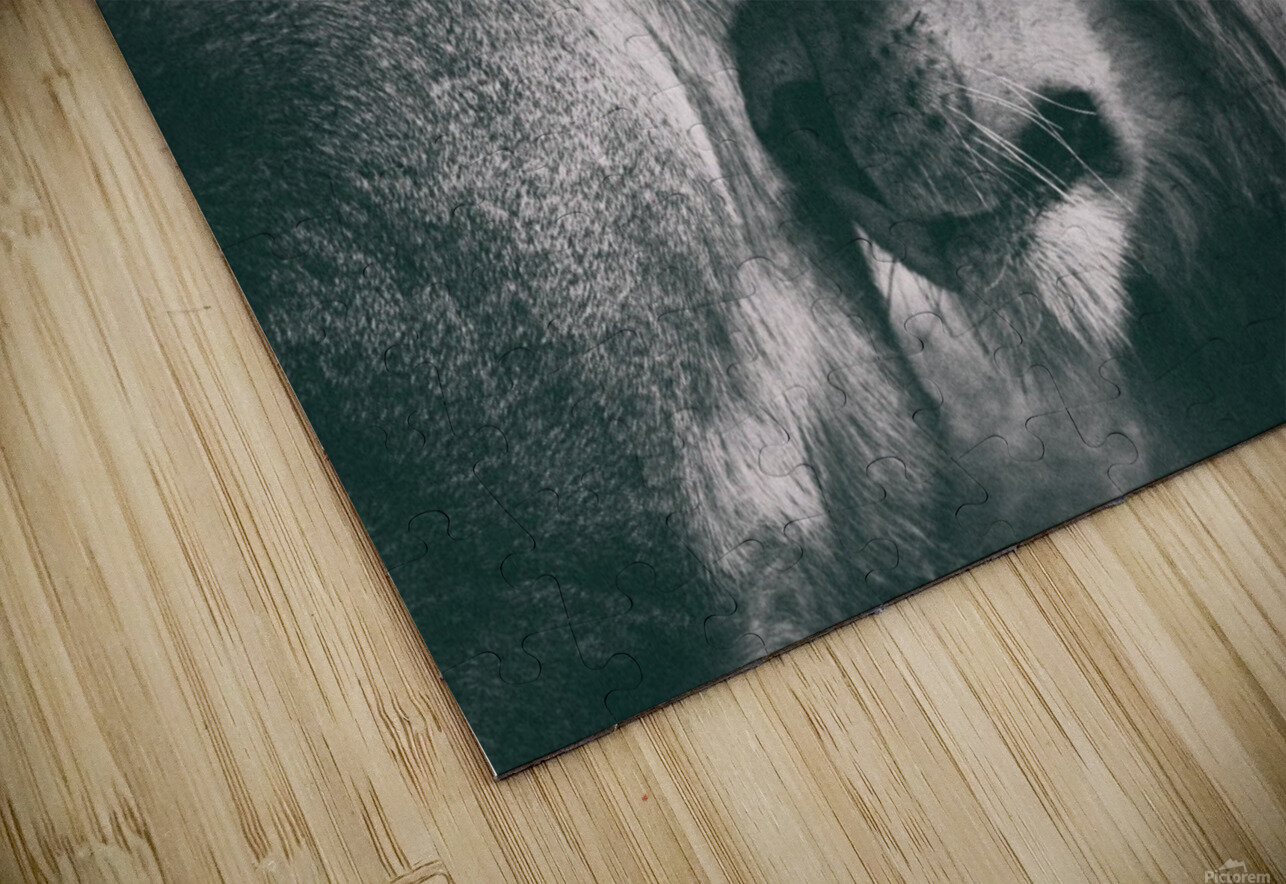 Love HD Sublimation Metal print