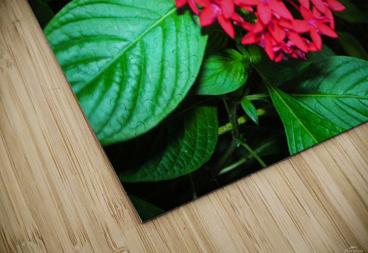Flower66 HD Sublimation Metal print