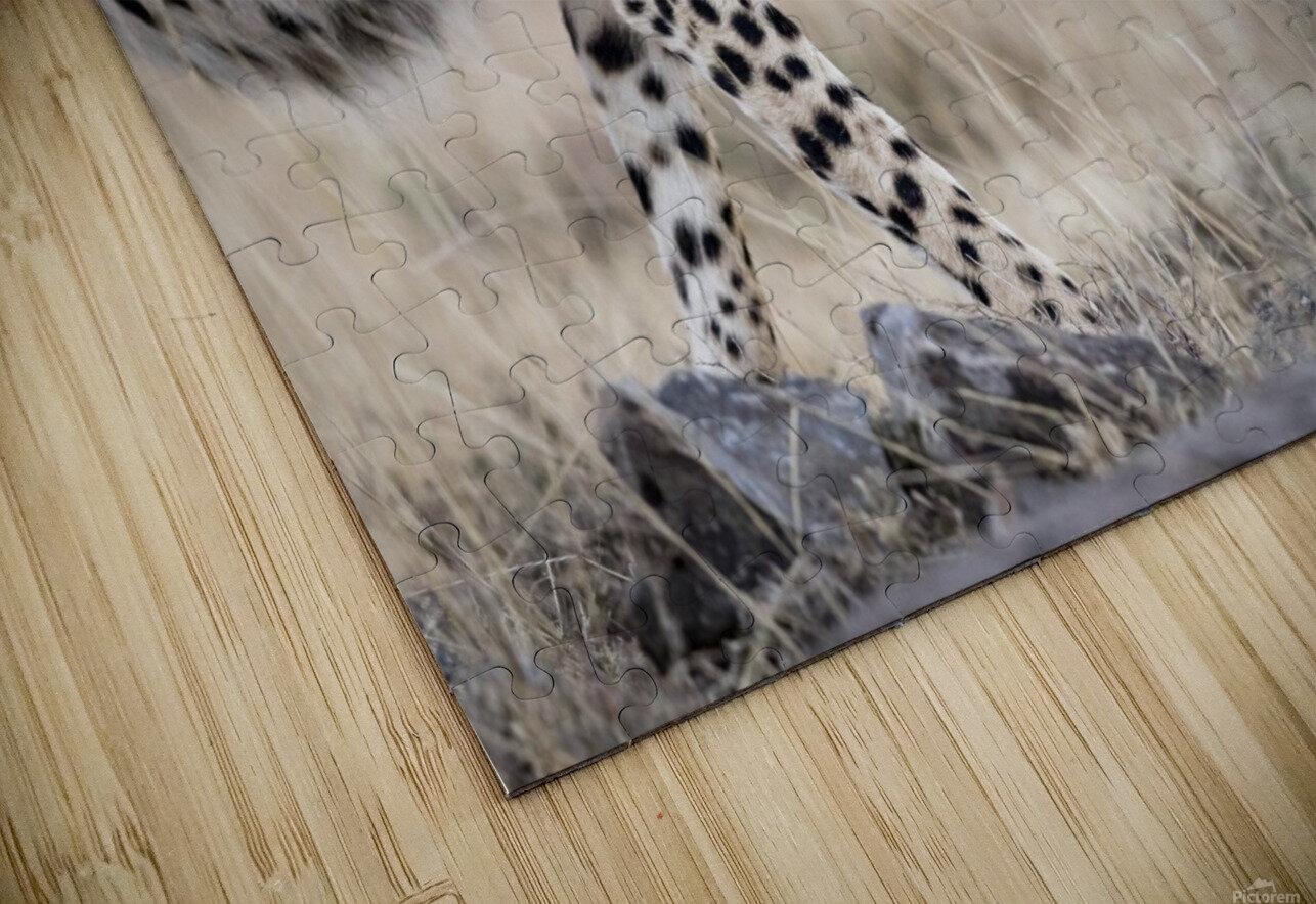 Cheetah Bro HD Sublimation Metal print