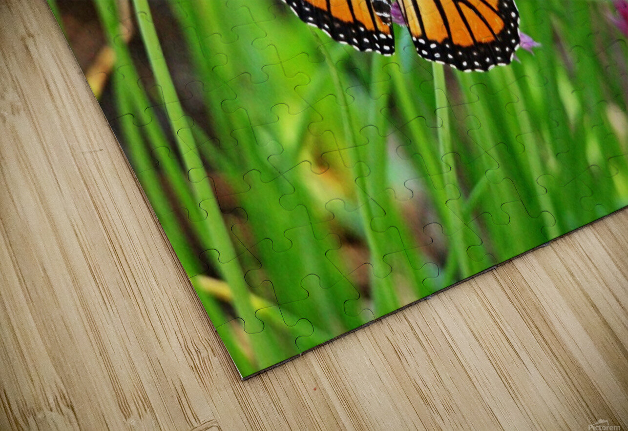 Monarch And Chives HD Sublimation Metal print