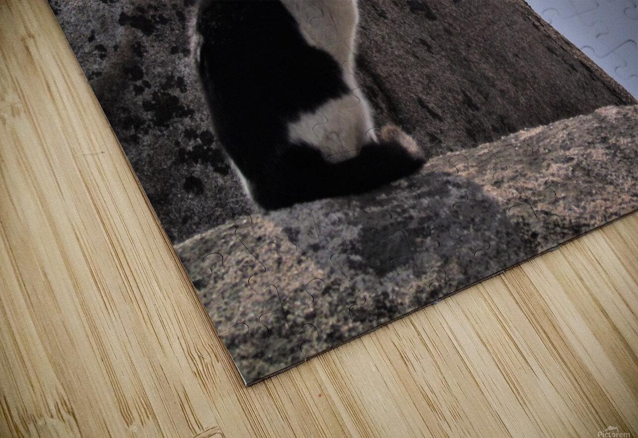 Mountain Cat HD Sublimation Metal print
