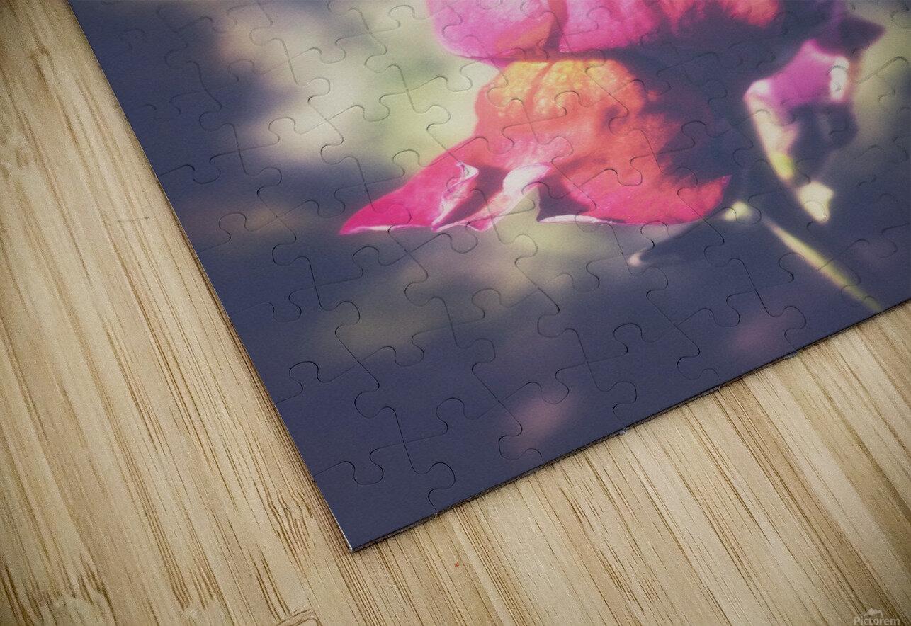 Lupine Fuchsia HD Sublimation Metal print