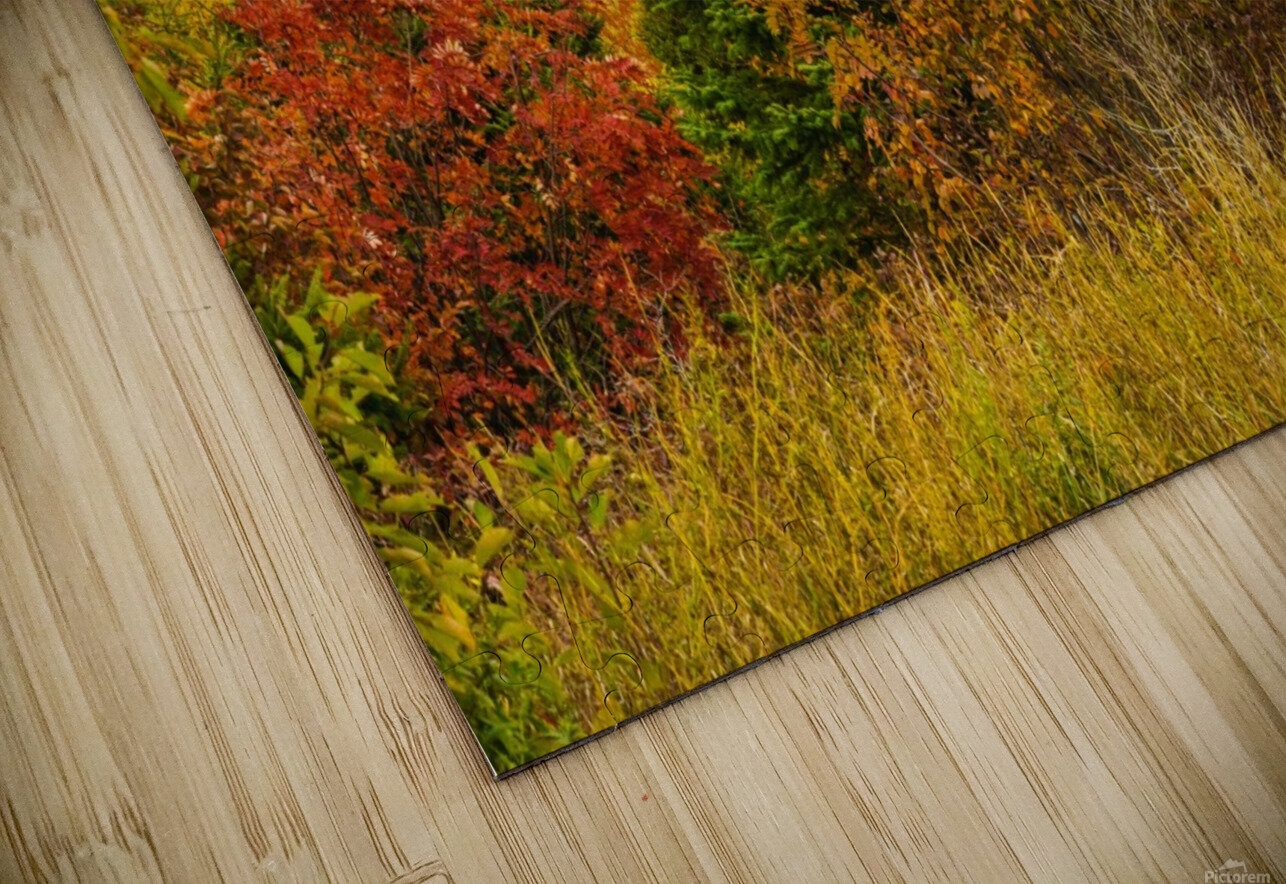 Autumn rainbow HD Sublimation Metal print