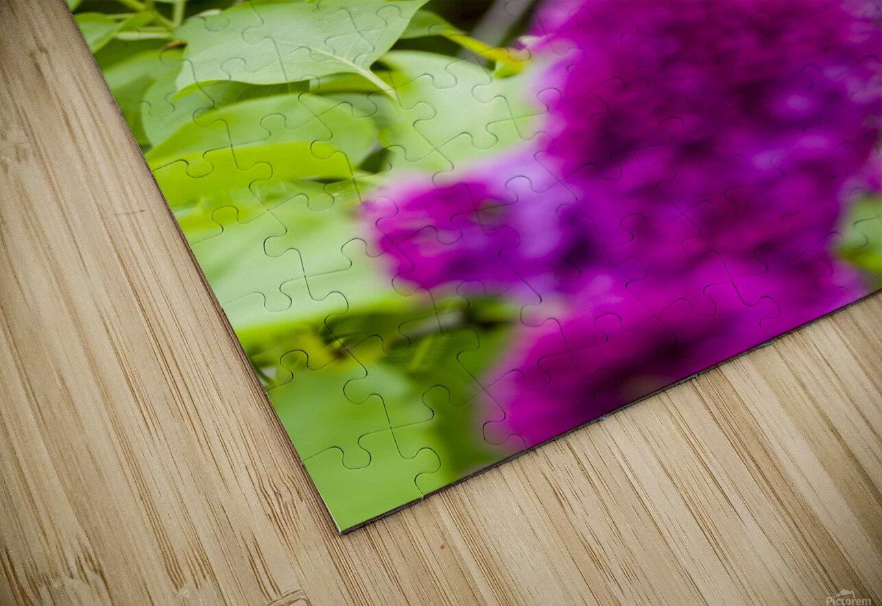 Purple Lilac Blossoms 2 HD Sublimation Metal print