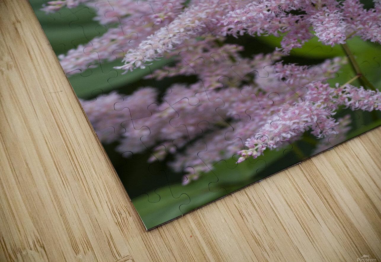 Pink Astilbe 1 HD Sublimation Metal print