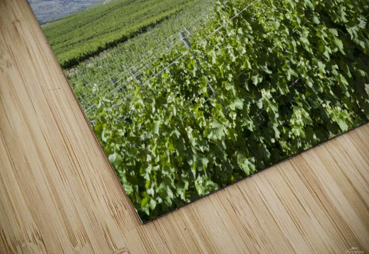 Okanagan Valley winery HD Sublimation Metal print