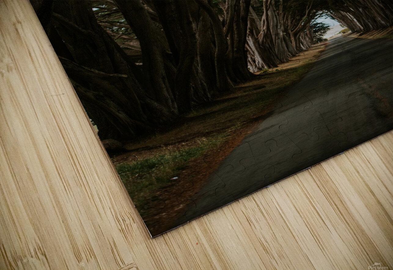 Cypress Tree Tunnel California Impression de sublimation métal HD
