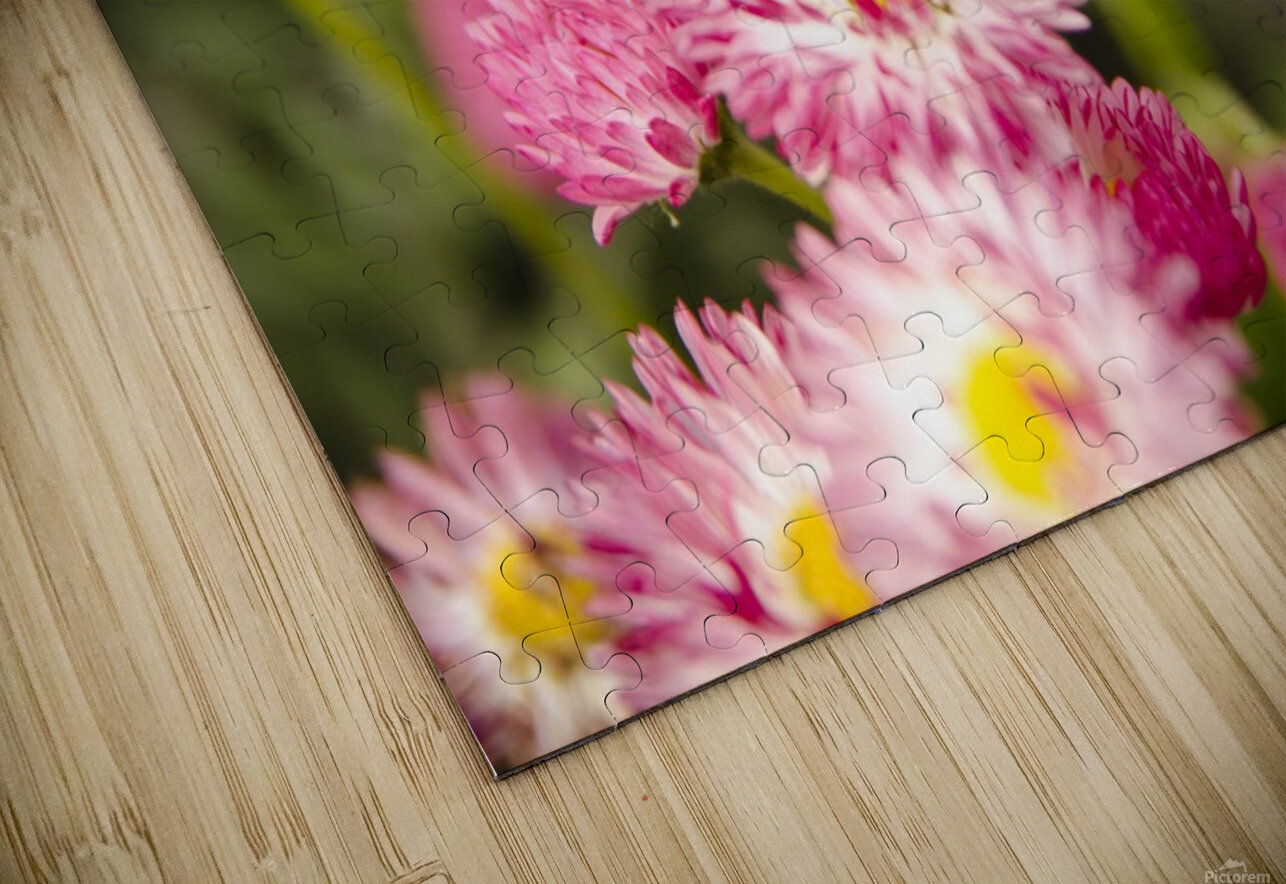Blooms in the Garden HD Sublimation Metal print