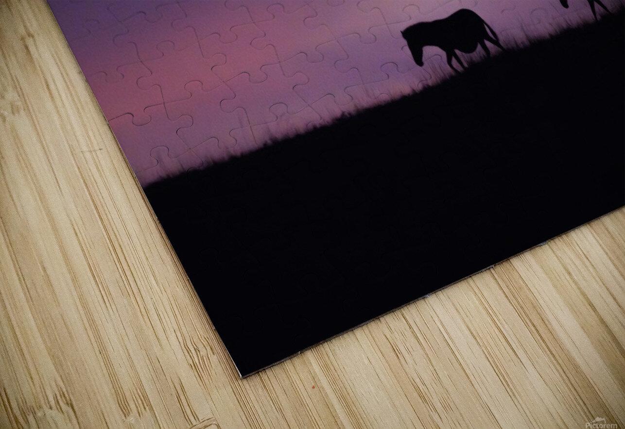 Zebra Sunrise HD Sublimation Metal print