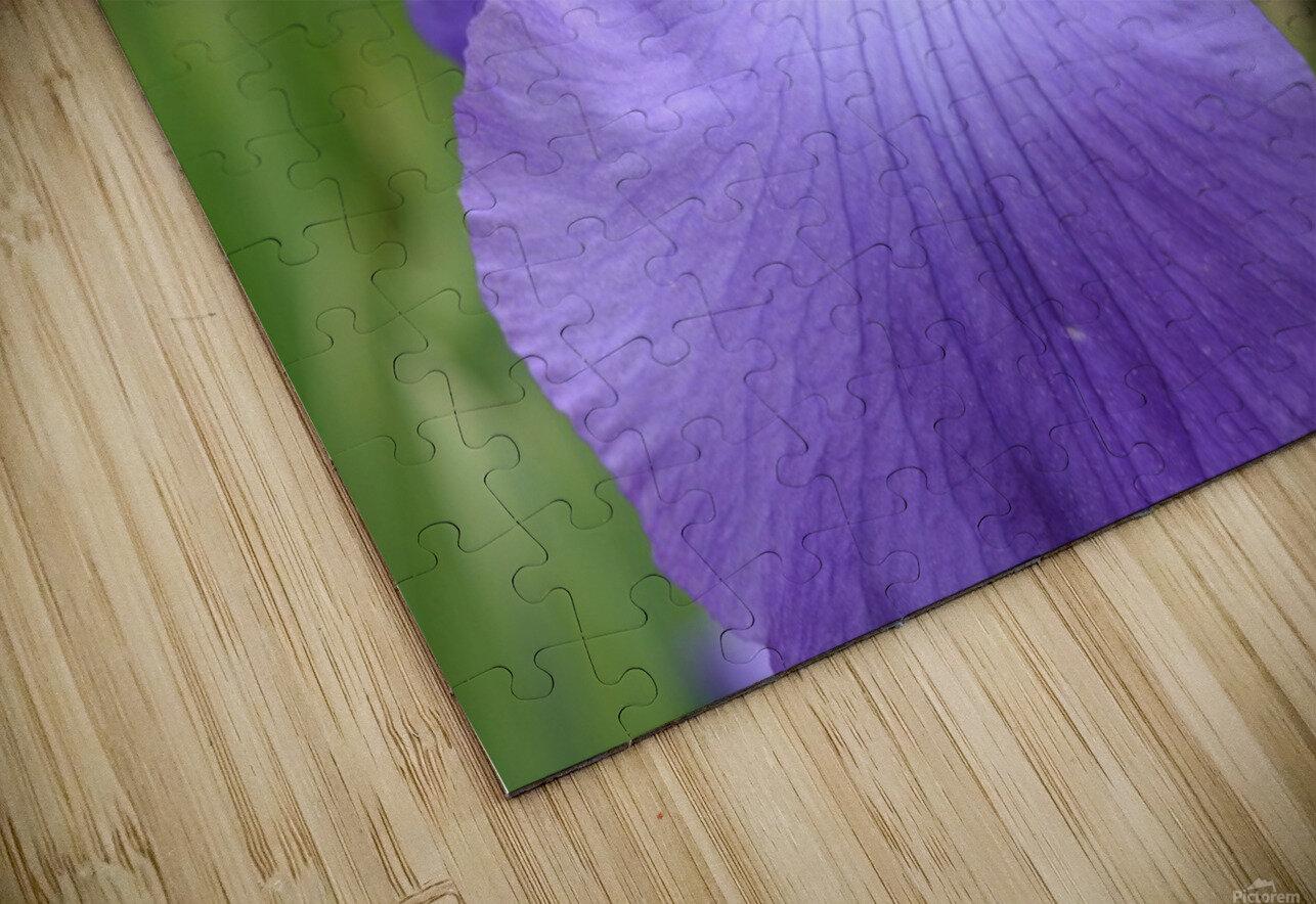 Purple Iris Photograph HD Sublimation Metal print