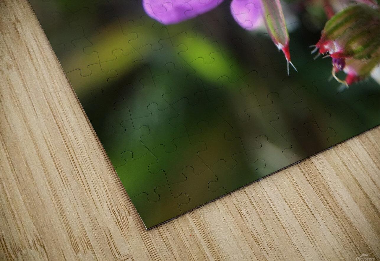 IMG_3451 HD Sublimation Metal print