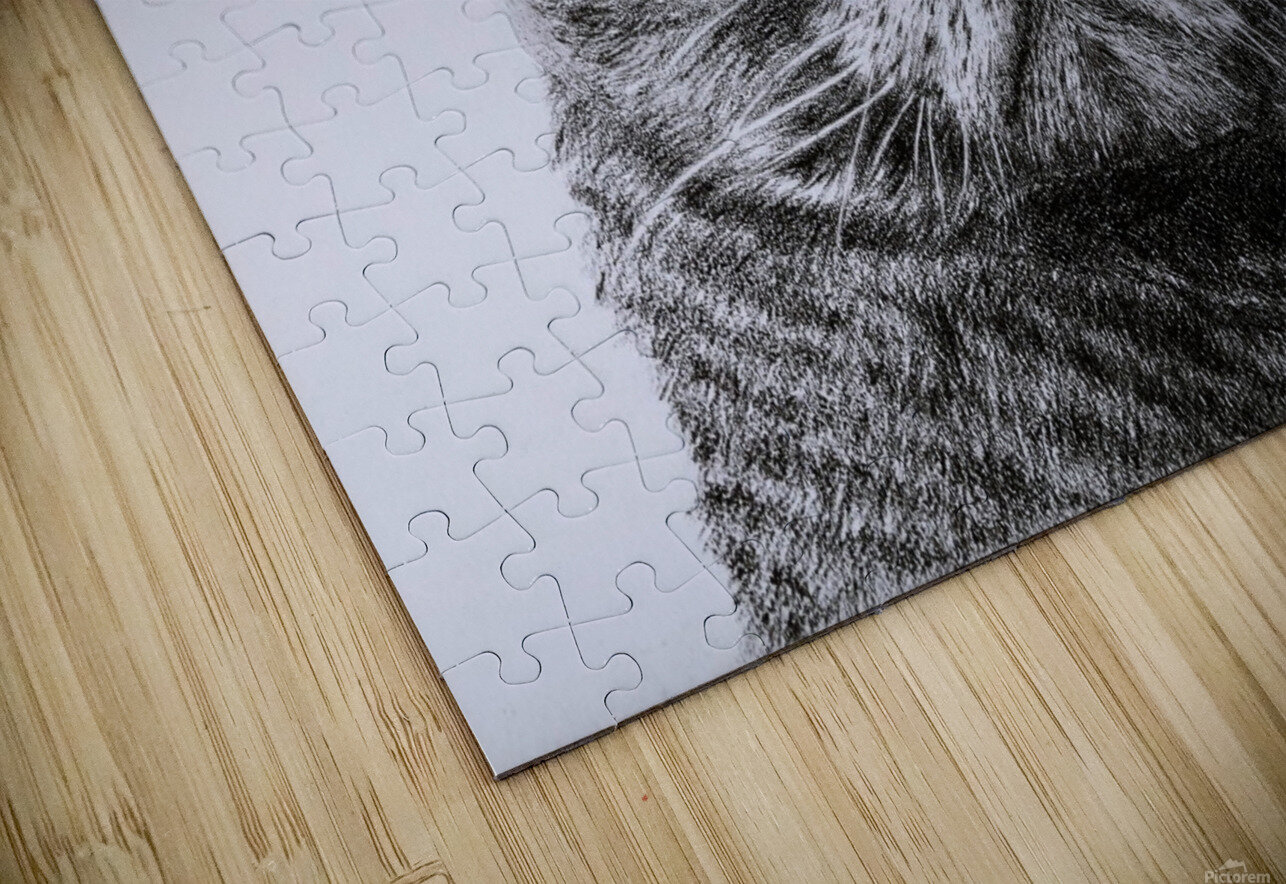 The Cat with glasses HD Sublimation Metal print