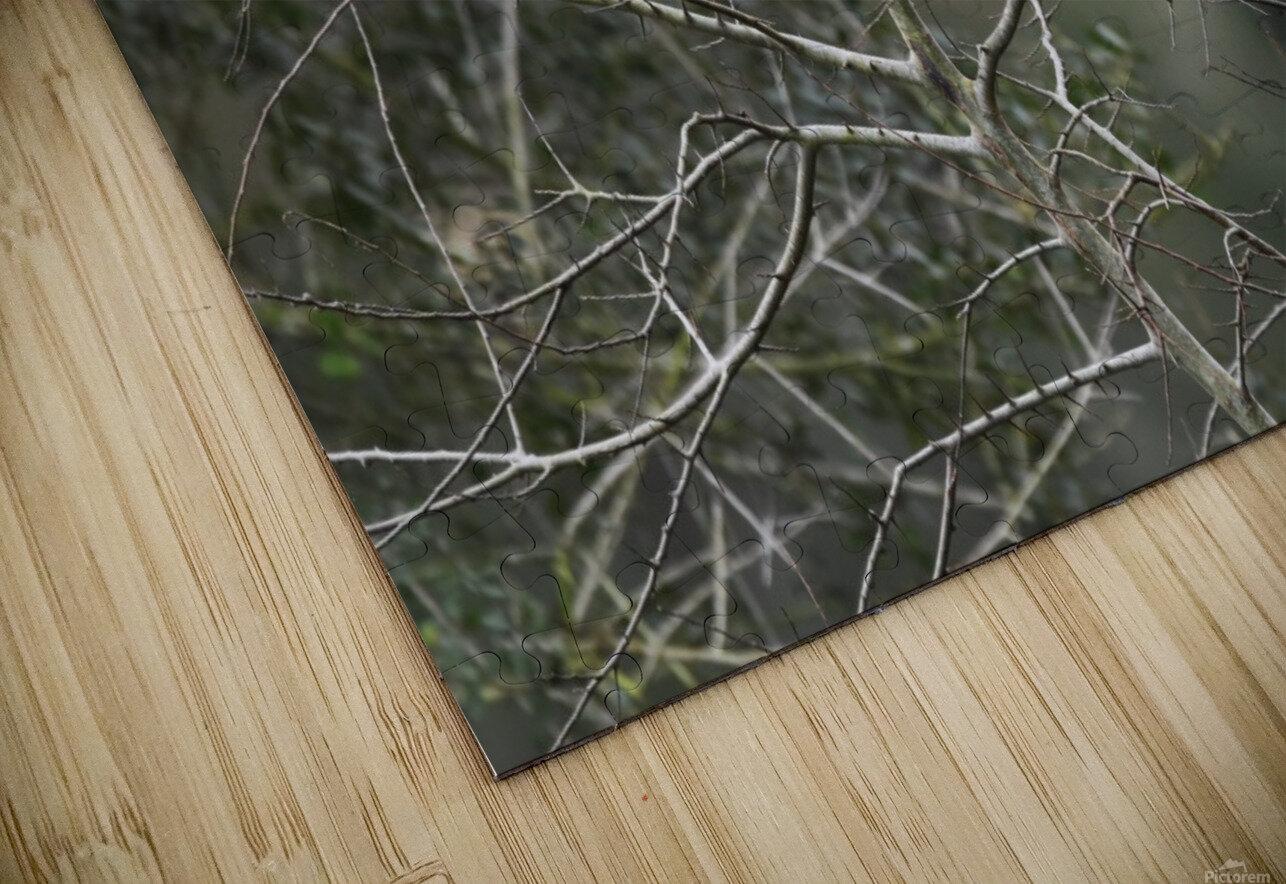 Resting Mockingbird HD Sublimation Metal print