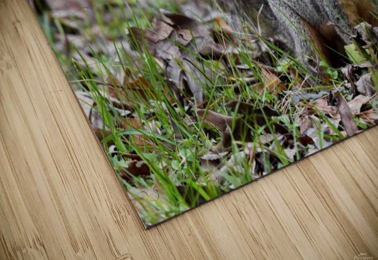 Squirrel 2 HD Sublimation Metal print