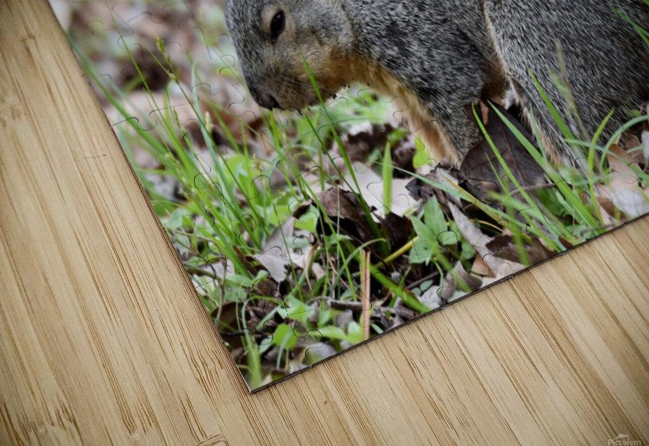 Squirrel HD Sublimation Metal print