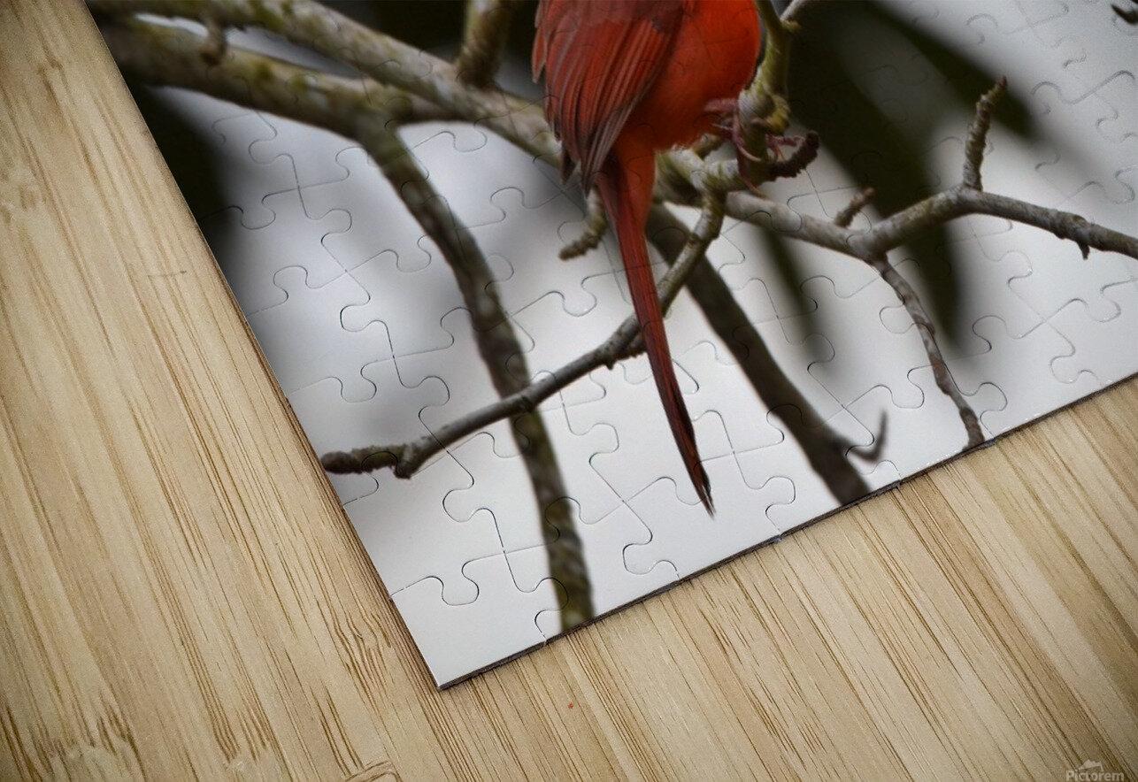 Cardinals 4 HD Sublimation Metal print