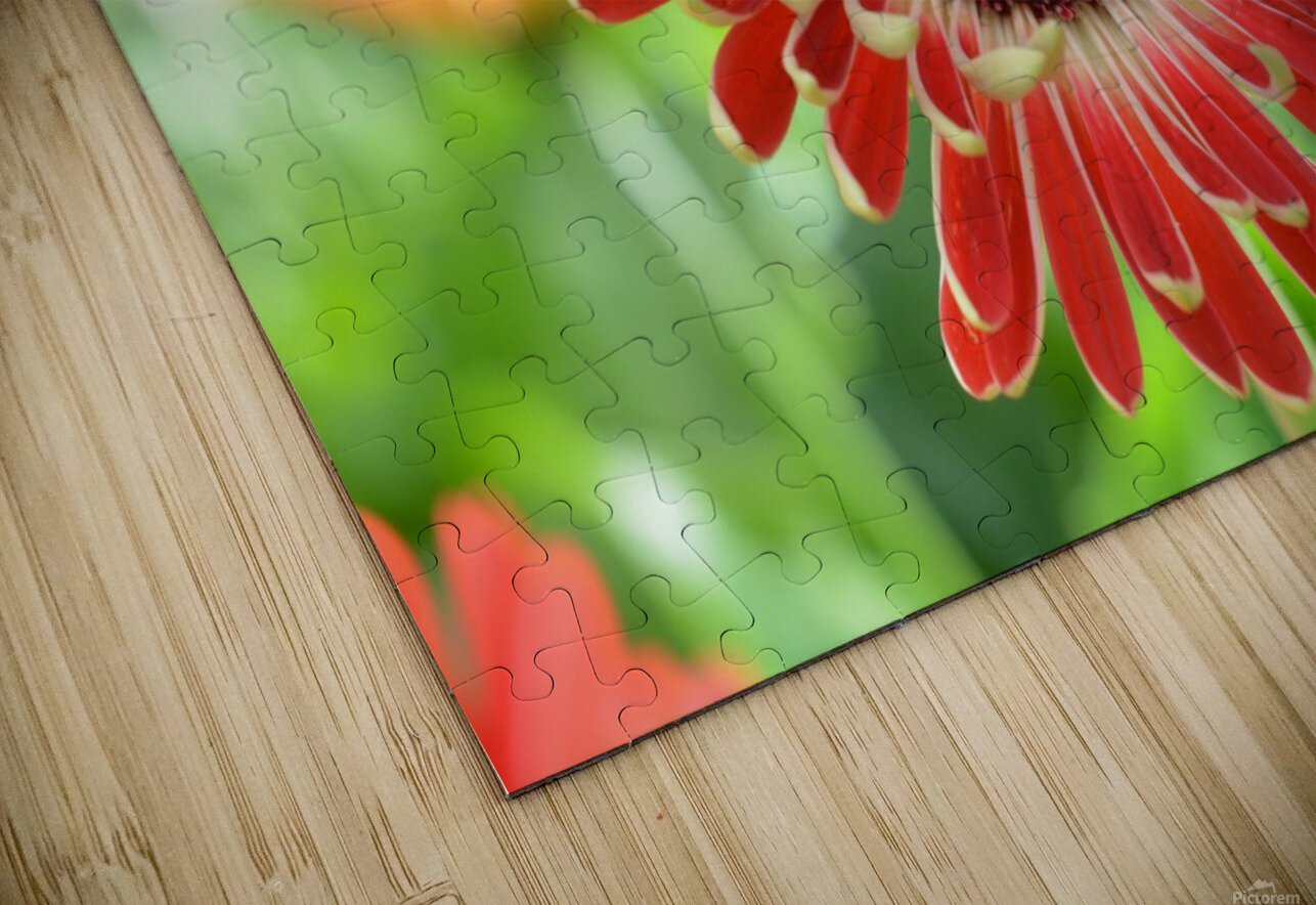 Red Flower Photograph HD Sublimation Metal print