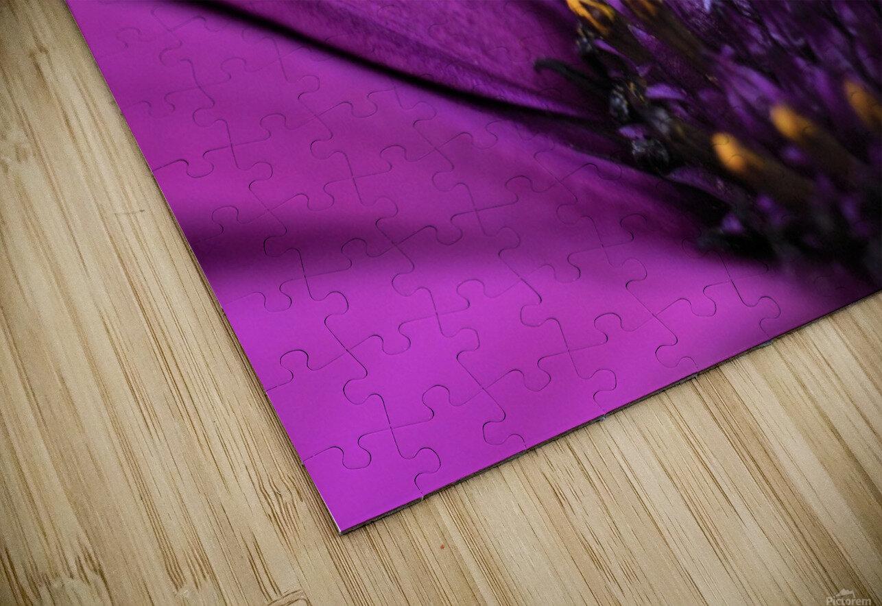 Purple Osteospermum Daisy Photograph Macro HD Sublimation Metal print