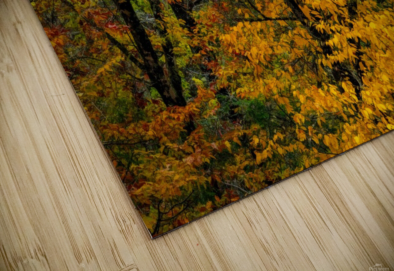 Yellow Tree Leaves HD Sublimation Metal print