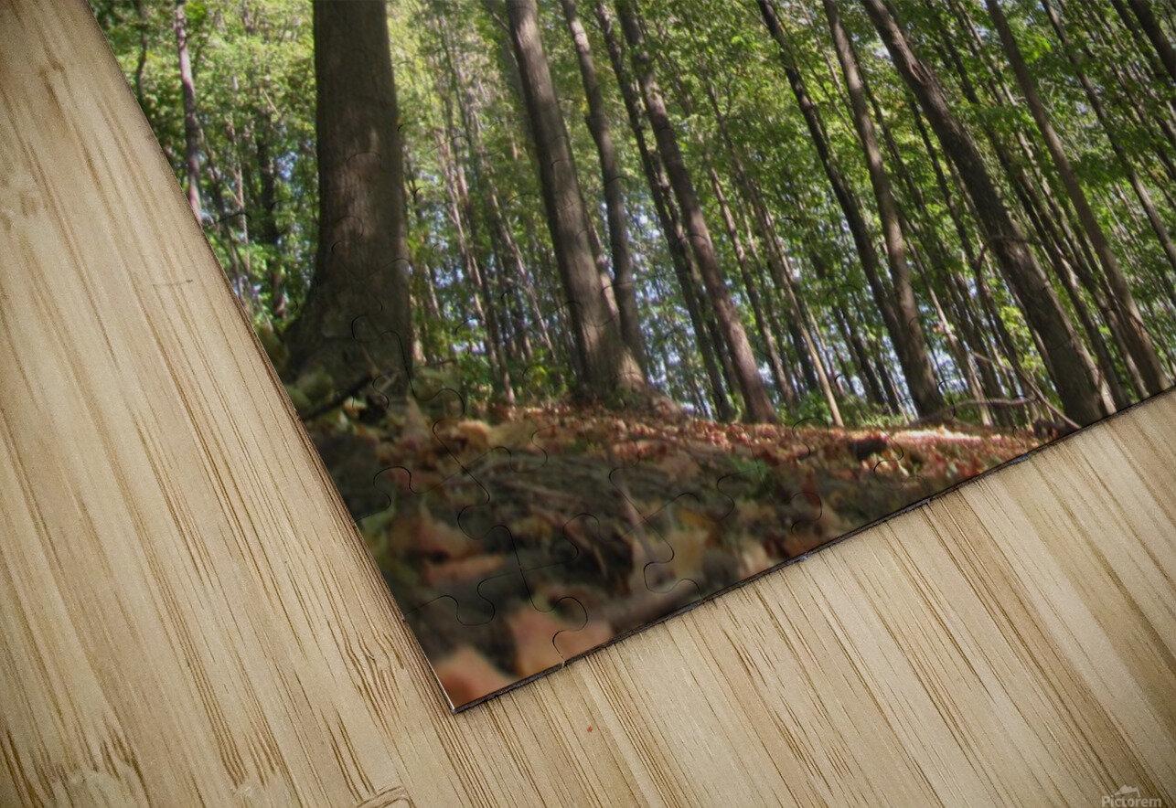 Landscape (249) HD Sublimation Metal print
