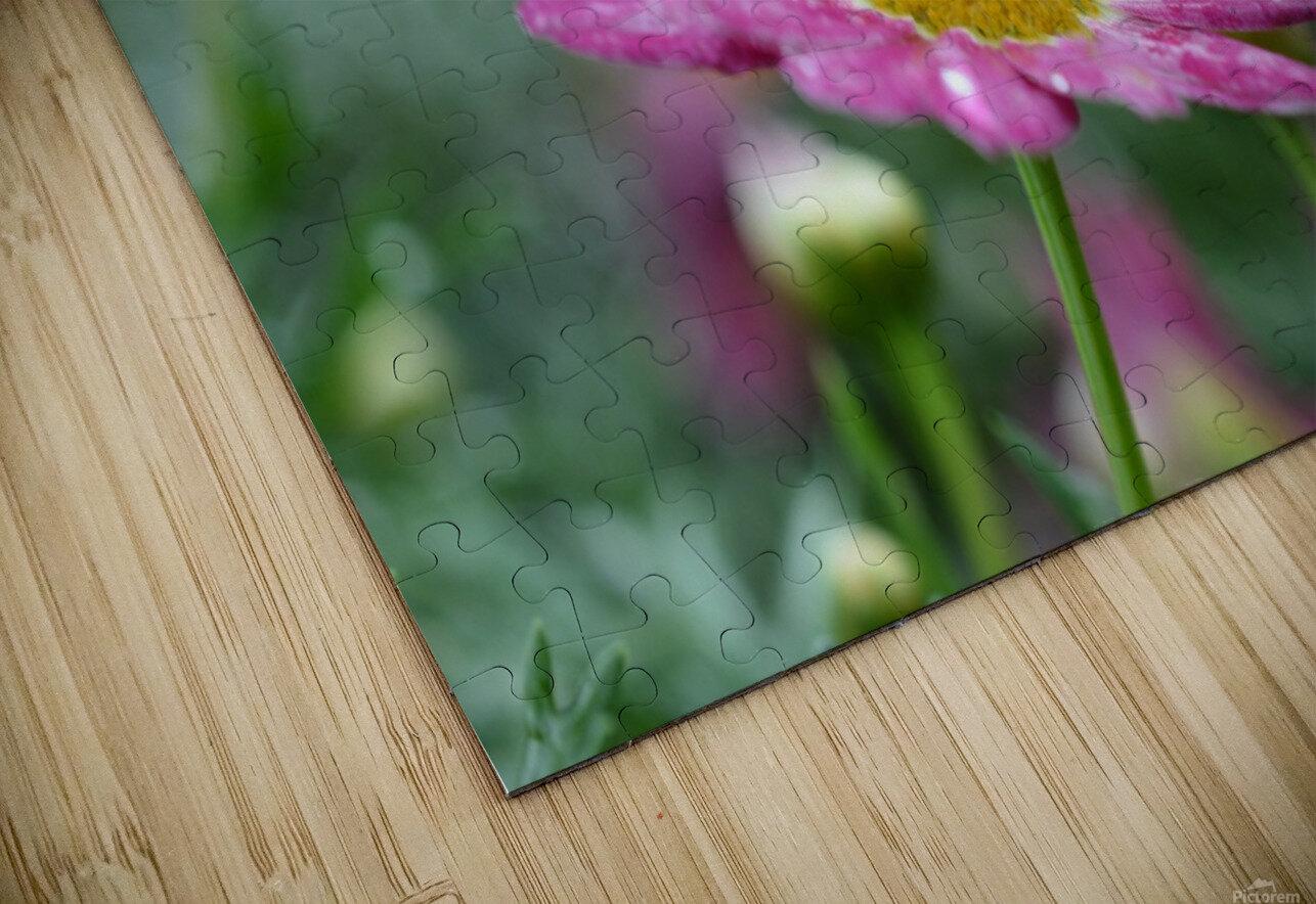 Pink Flower Photograph HD Sublimation Metal print
