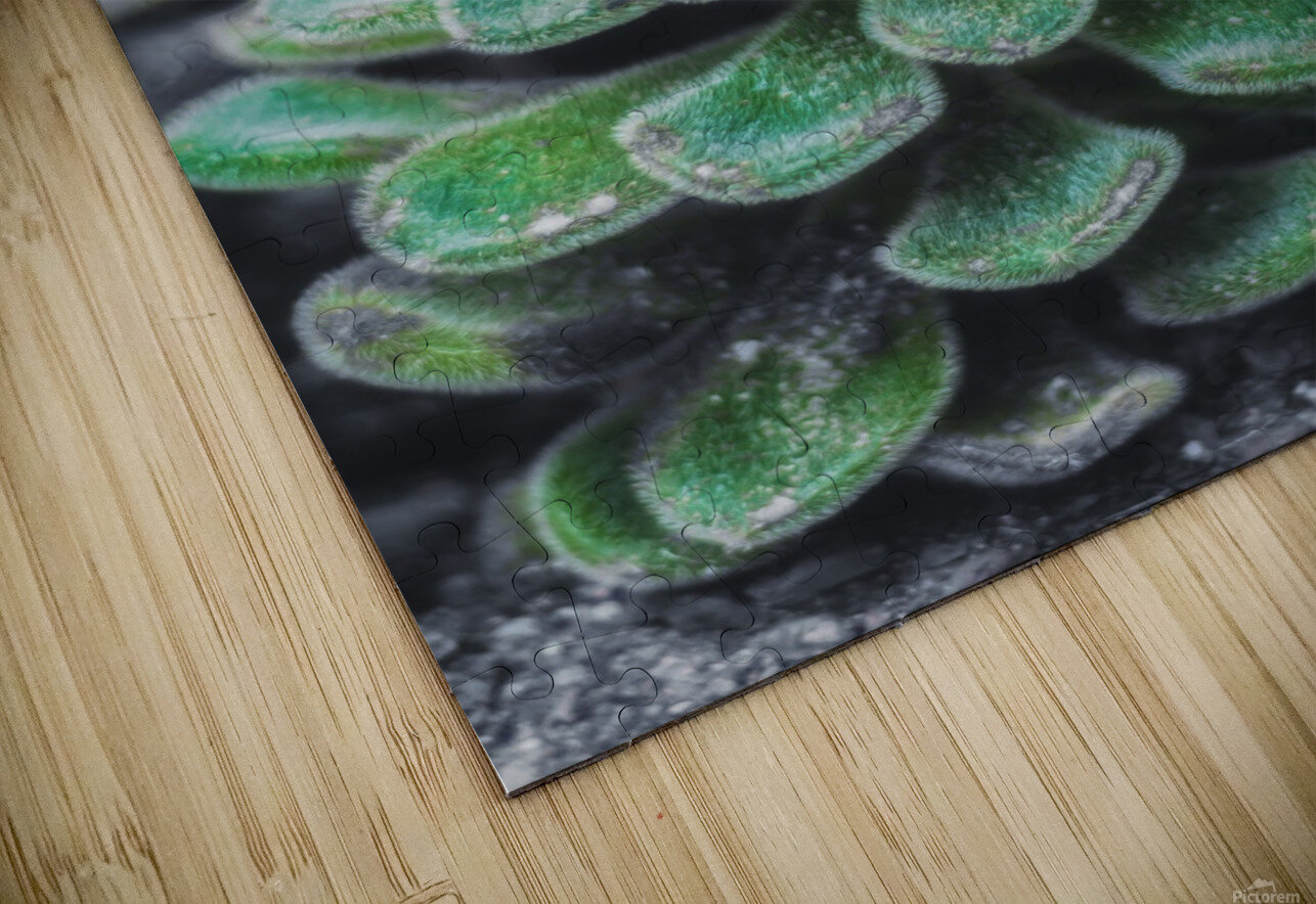 Sweetyplant HD Sublimation Metal print