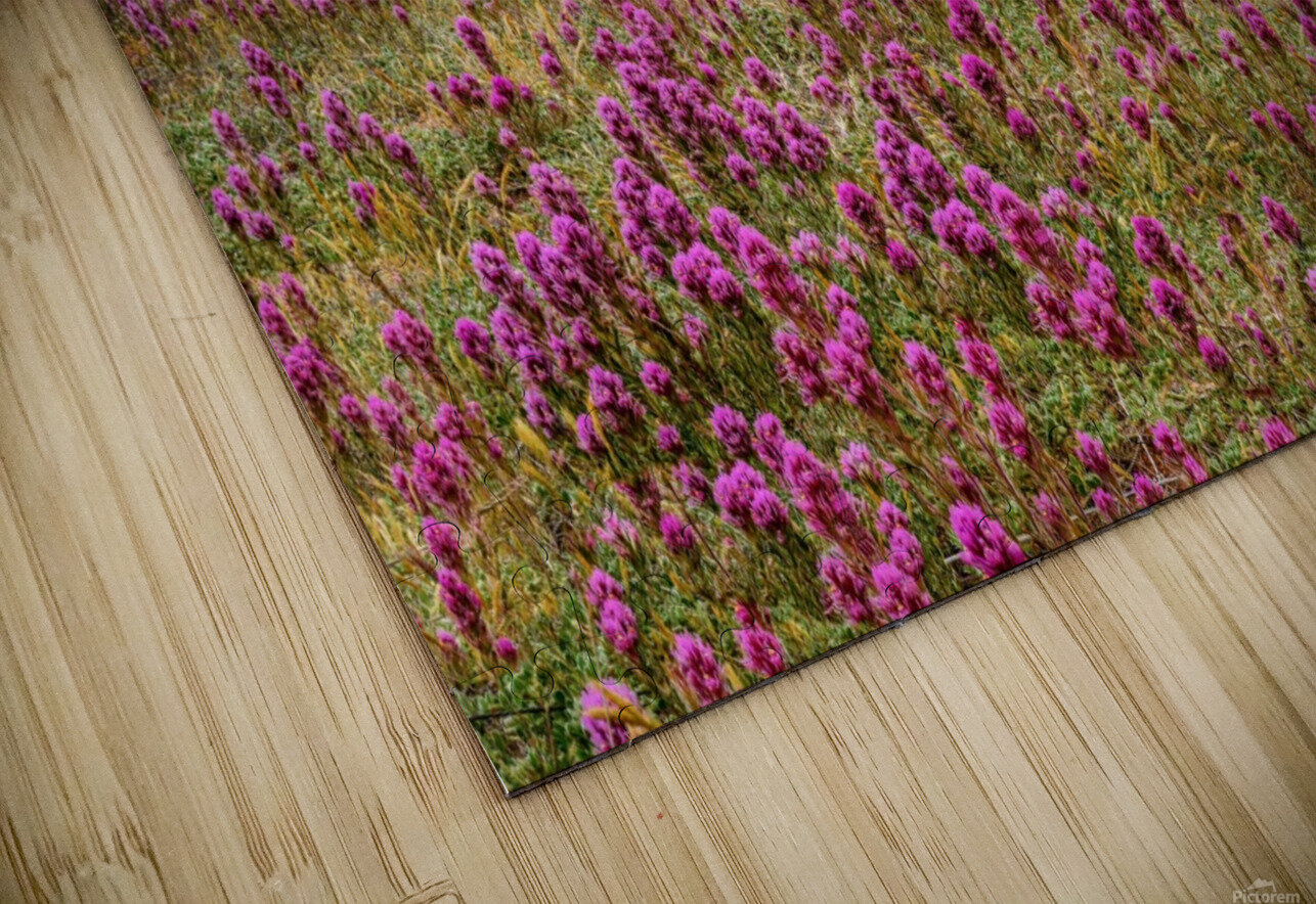 Clover Fields in Sedona HD Sublimation Metal print